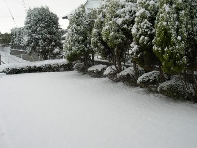 Snowgarden01
