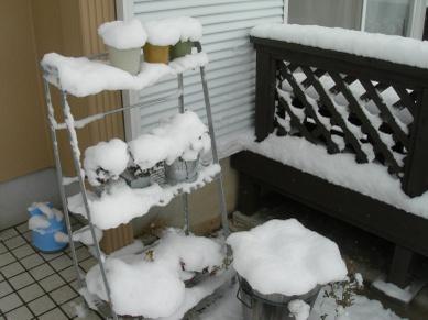 Snowgarden03