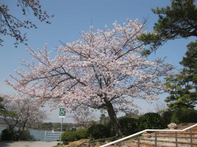 Tokiwa2011041002