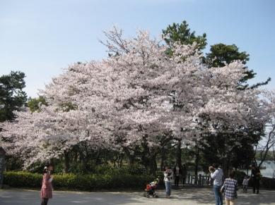 Tokiwa2011041003