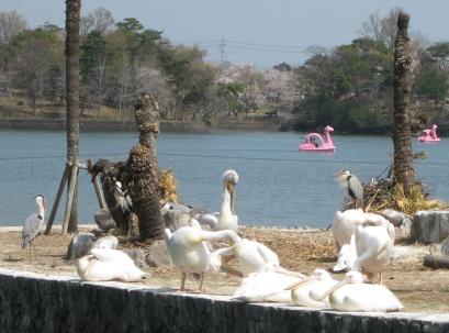 Tokiwa2011041006