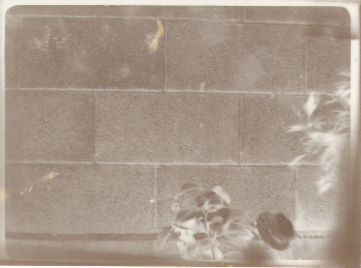 Blackwhite19822nega